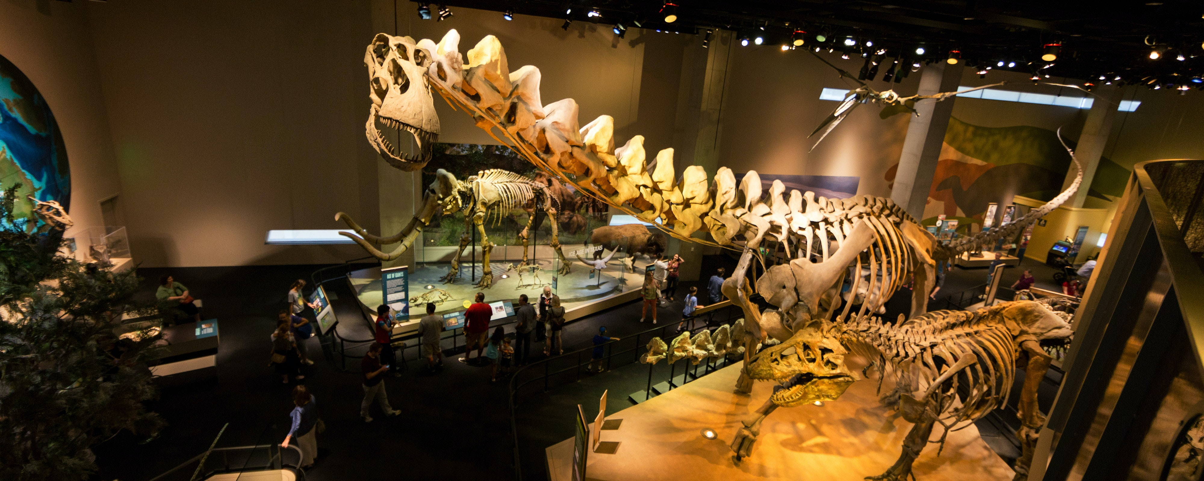 A view of the The gargantuan fossil