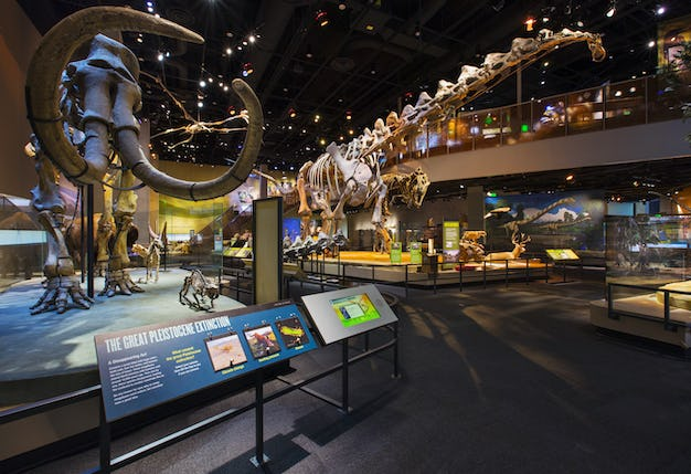 A look over the dinosaur display area at night.