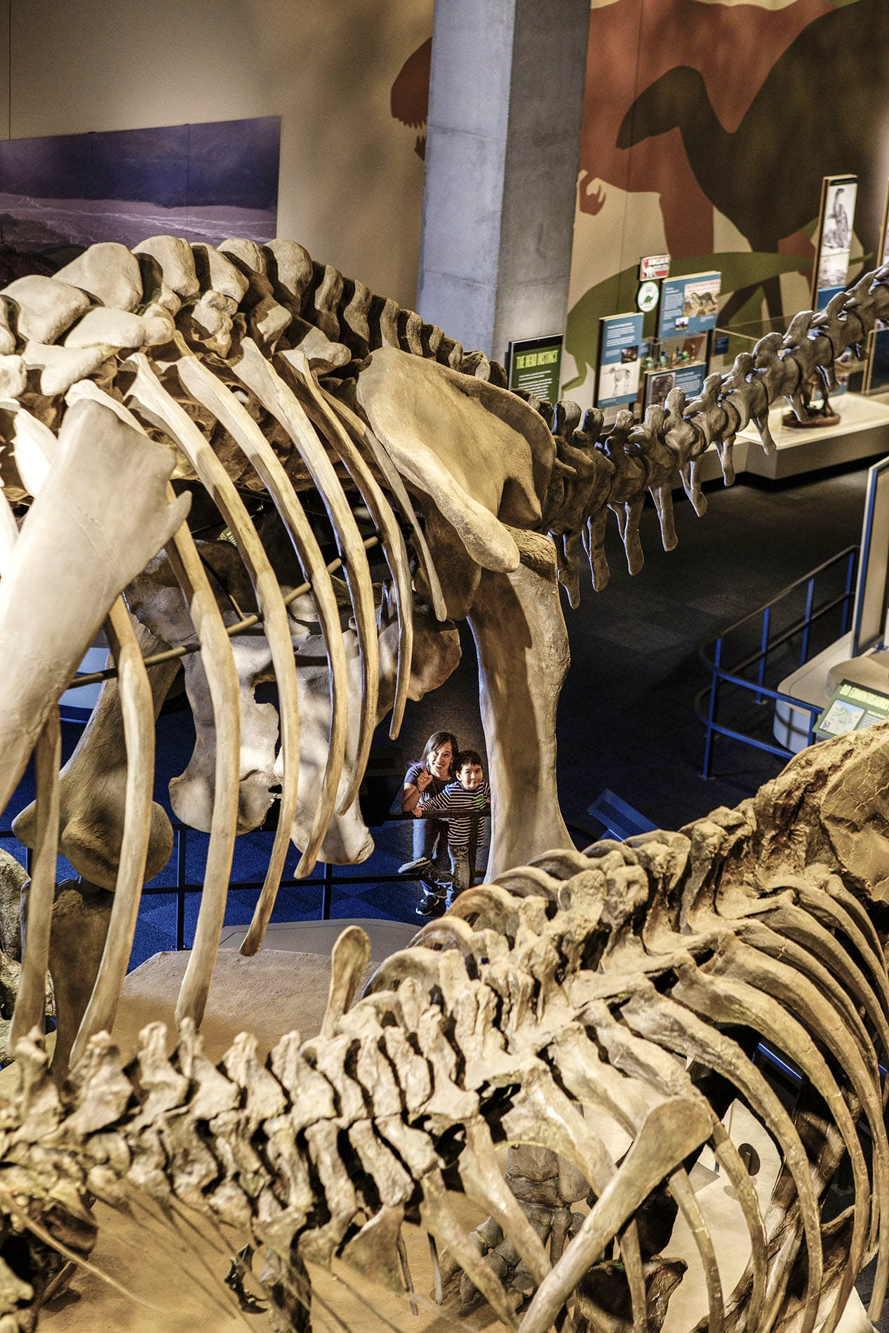Get Tickets   Perot Museum of Nature and Science